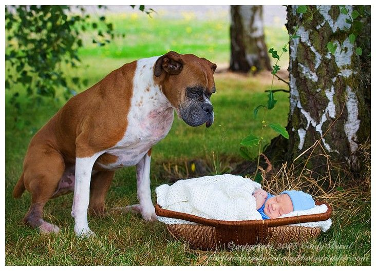 Boxer and Baby...we will have to do this with our boxer!! <3