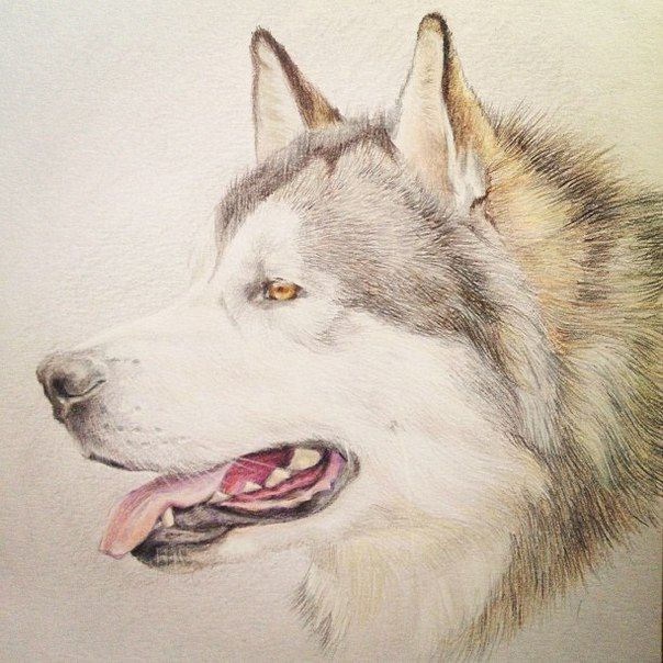PetPortrait. Портреты, рисунки. Собаки, кошки. | Собаки ...