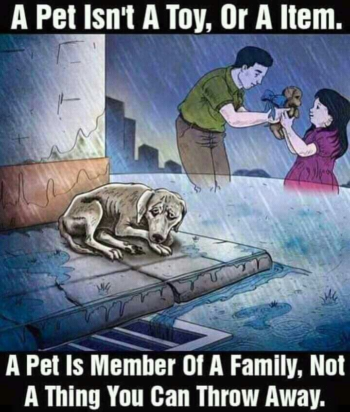REMEMBER WITH THE HOLIDAYS COMING UP. PLEASE DON'T BUY A PUPPY.. ADOPT A SHELTER PET. PLEASE..