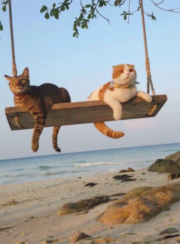 swinging cats ♥