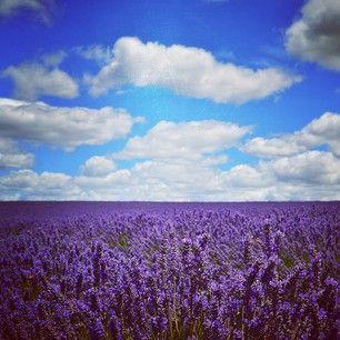 TAZMANIA: visit Bridestowe Lavender Estate