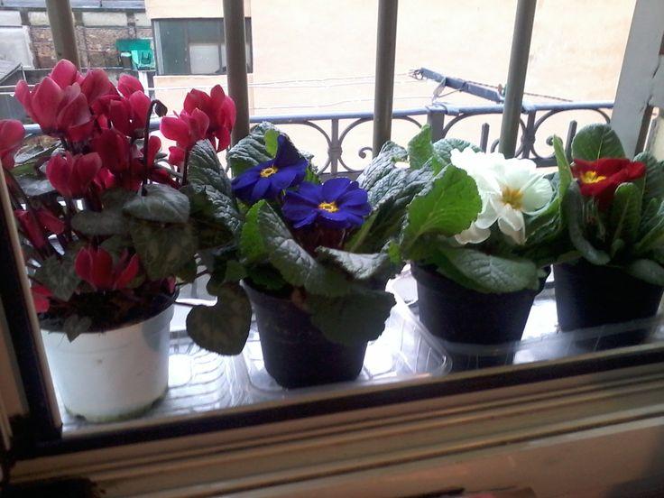 le mie piante sul davanzale della finestra in cucina