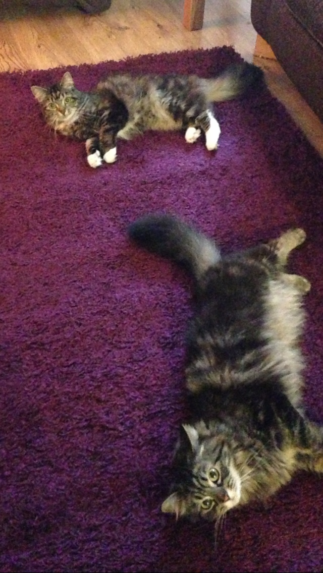 I always get free cats with a new rug.....