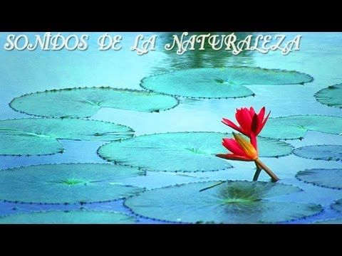 AGUA Y RELAX 4 SD, SONIDOS DE LA NATURALEZA, SOUND OF NATURE, RELAJANTE, RELAXATION, RELAXING