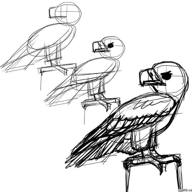 eagle cartoon step 1: sketch the wings, thick legs, and sharp beak.