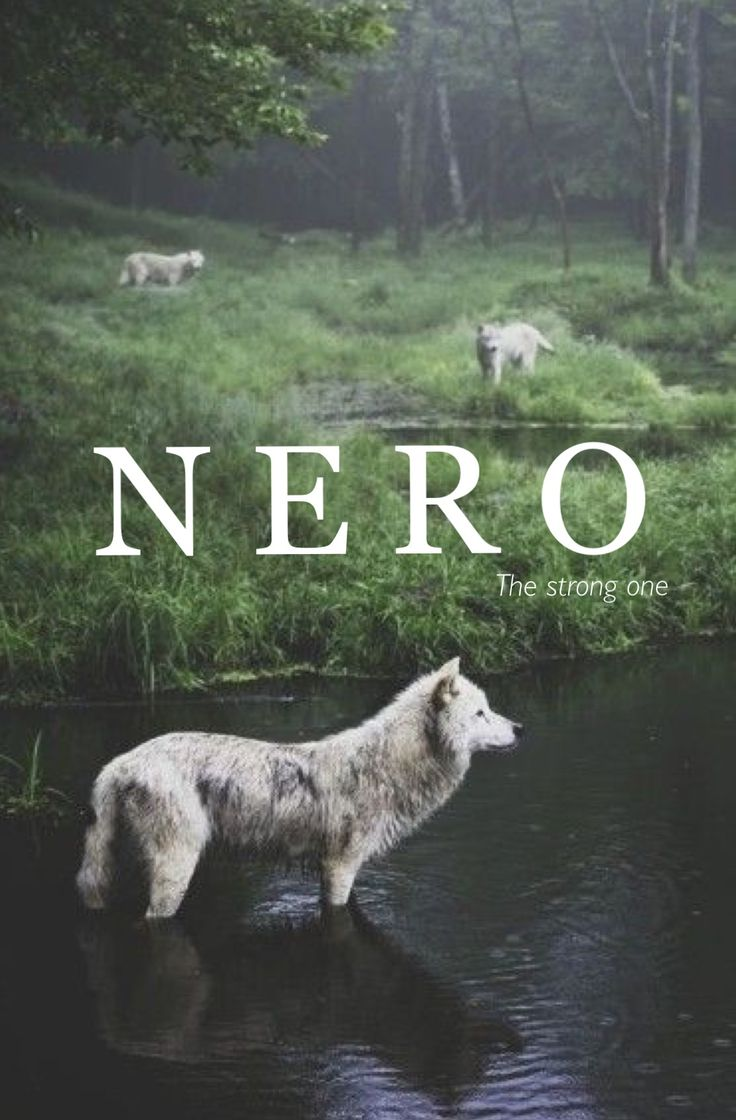 Nero, old Norse names, strong one, vintage baby names, strong male names, baby boy names, unique baby names, N baby boy names, middle boy names, names that start with N