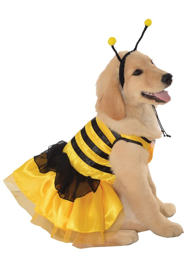 bumble bee dog costume halloween costumes halloweencostumes dogs - Dogs With Halloween Costumes On