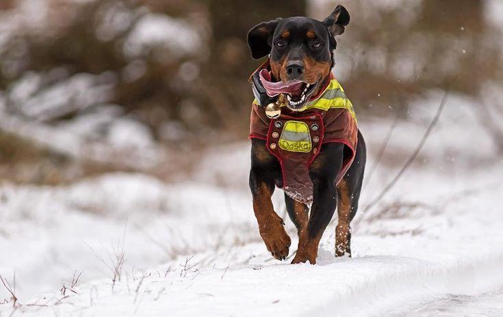 Deutscher Jagdverband E V On Instagram Wir Wunschen Allen Schutzinnen Schutzen Treibern Und Uns In 2020 Jagdhunde Jagd Hundefuhrer