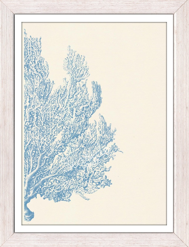 Antique sealife Illustration -Light blue Sea fan coral no.04 - sea life print-First item free shipping. $12.00, via Etsy.