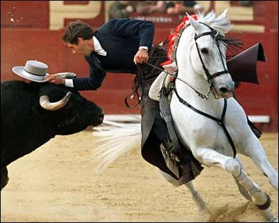 I'm not necessarily a fan of bullfights, but Rejonio is a display of skill, athleticism, and training on both horse and rider unlike any other sport in the horse world.