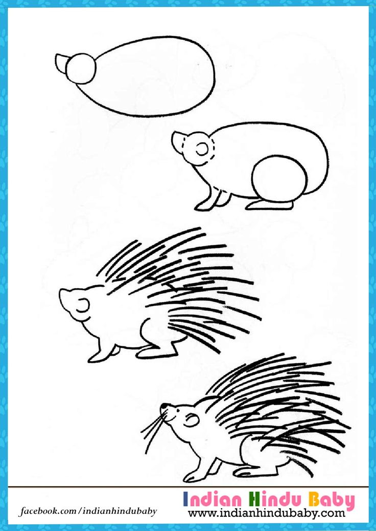 Teach your kid to draw Porcupines with simple drawing tips