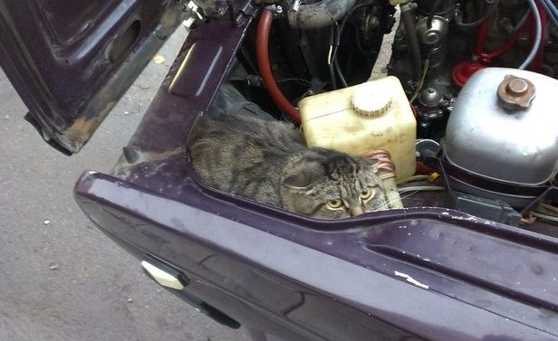 This cat was going by car about 15 km