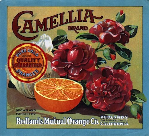 140 Best Images About Label Oranges On Pinterest