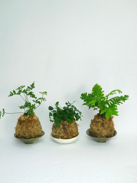 Japanese Kokedama Plants by white tree floral design