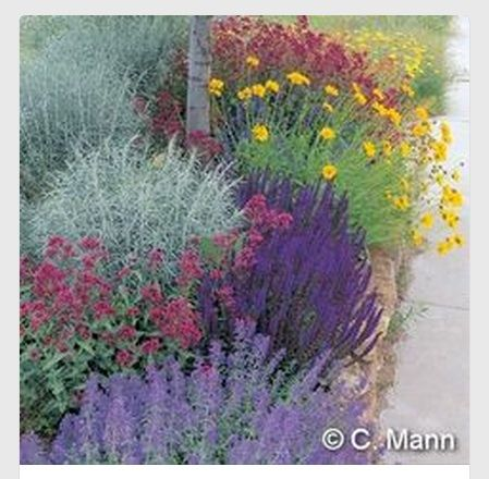 Low water flowers for cottage garden feel [Waterwise combo of Salvia, Achillea, Nepeta, Coreopsis, Centranthus and Artemisia.]