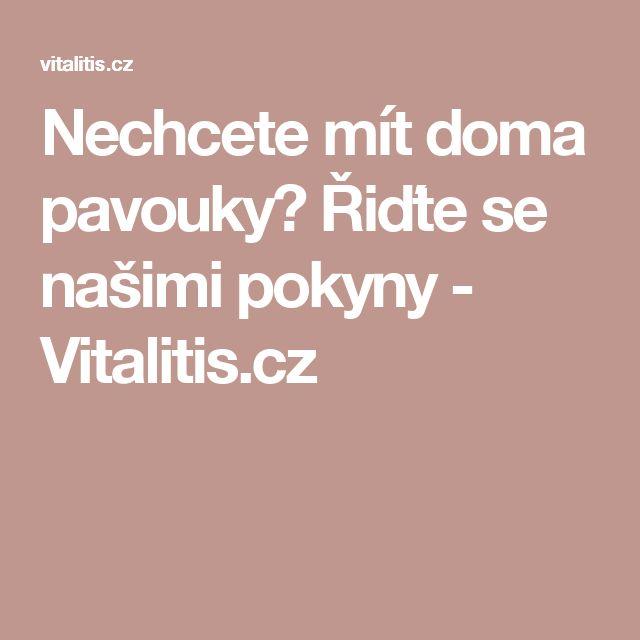 Nechcete mít doma pavouky? Řiďte se našimi pokyny - Vitalitis.cz