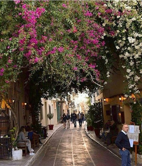 Lisiou street in Plaka area, is one of the most famous destinations in downtown Athens. Classical houses, traditional Greek food accompanied by live music and colourful bougainvilleas flowers create the perfect set up.  Photo by @leonard_redmond  #Lisiou #street #Athens #city #Plaka #Greece #greecestagram  #greecestagramit