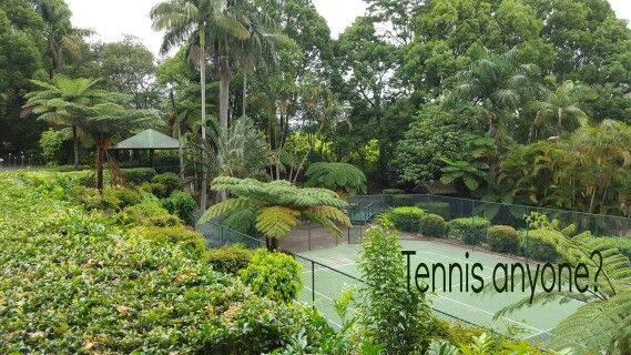 What a great tennis court surrounded by lush tropical trees.