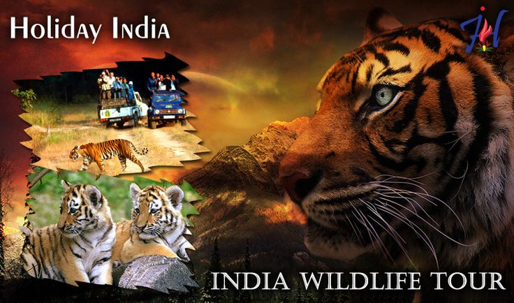 Wildlife is all around us and they can entertain and educate us if only we stop to look around. Experience the rich nature of the environment at wildlife of India.