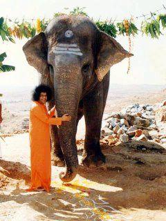 Sai Geetha - Sai Baba's pet elephant dies - Sai Geetha merged at His lotus feet at around 5pm (local time) on 22nd May'2007