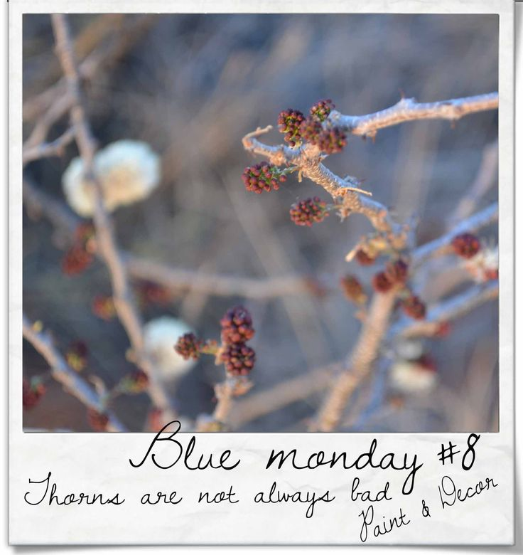 Let us not be wounded by the thorns that sometimes cross our paths, they are not always as ugly as we think - and sometimes, it makes us go slower so that we can see things more clearly xxx Happy Blue Monday all you wonderful people xx #bluemonday #thorns #paintdecor #8