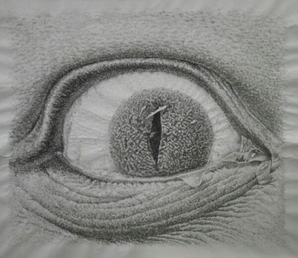 (crocodile tears) a painting in India ink. Size : 10F