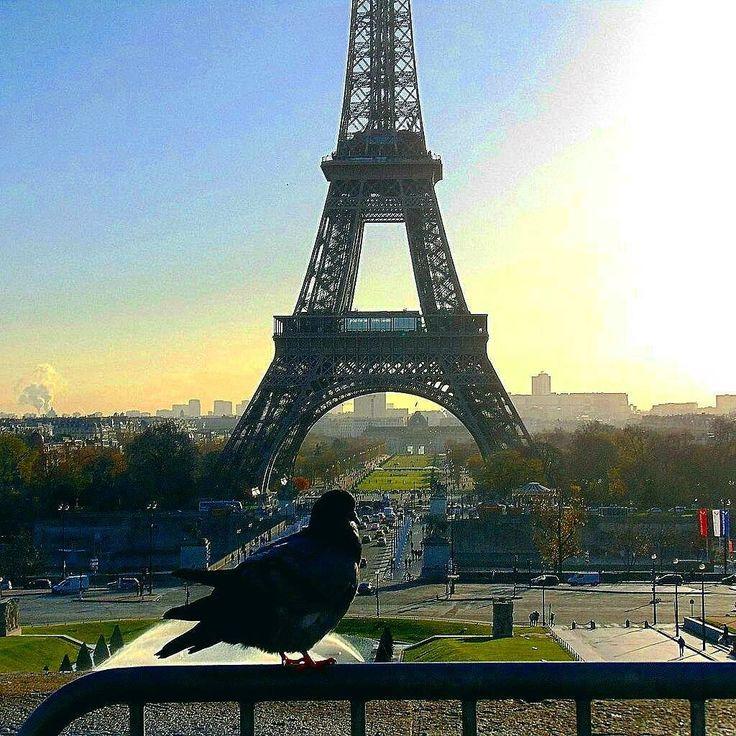 Patrz oczyma fotografuj sercem. David duChemin  #seemyparis #parisphoto #parisienne #parismonamour #parismaville #parisjetaime #ig_europe #igersparis #igparis #discoverearth #worldbestgram #wonderful_places #streetphoto #streetphotography #travelworld #traveldeeper #travelingram #autumn #automnleaves  #super_france #topparisphoto #hello_france #worldbestgram #streetphoto #streetphotography unlimitedparadise #wonderful_places #fotowyzwaniejestrudo