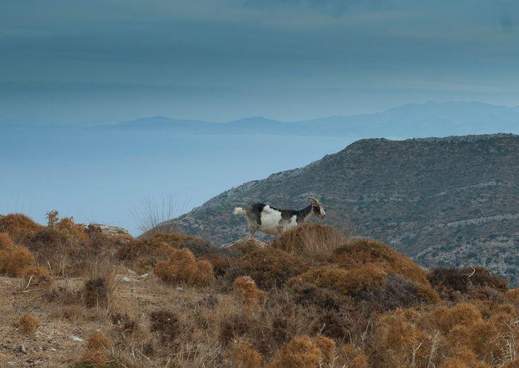Στιγμιότυπα - Aegean Essence - , cyclades aegean essence, cyclades photo by yianikol, why-not