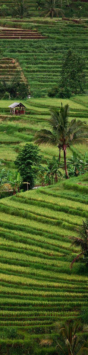 Green rice terraces in Bali, Indonesia