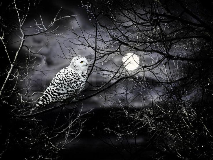 Stock Bild von 'Halloween-Nacht Thema mit Mond und Eule gegen trübe dunklen Himmel'