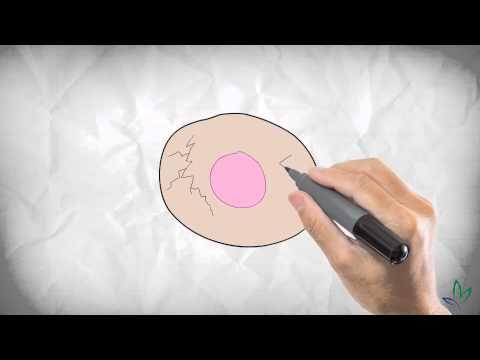 Syra-Basbalansen - en begriplig förklaring från basbalans.se - YouTube