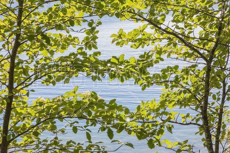 Green Leaves - Fototapeter & Tapeter - Photowall