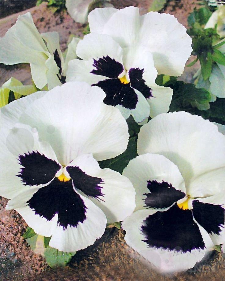 Heirloom Garden flower seeds bank potted Bonsai rare exotic plant | eBay