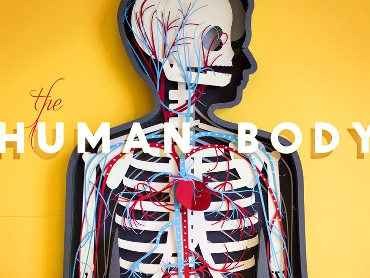 """The Human Body (stop-motion!). A handmade """"demo video"""" for Tinybop's Human Body App, which teaches kids about how body systems function.  All parts are made with paper—including the sounds.  Made by @Kelli Anderson for friends at @Tinybop  More information about the process here: http://kellianderson.com/blog/2013/08/illustrating-tinybops-1st-app/ Play with the app itself here: http://www.tinybop.com/products  Sound recording and mixing by http://www.thesoundsinmyhead.com"""