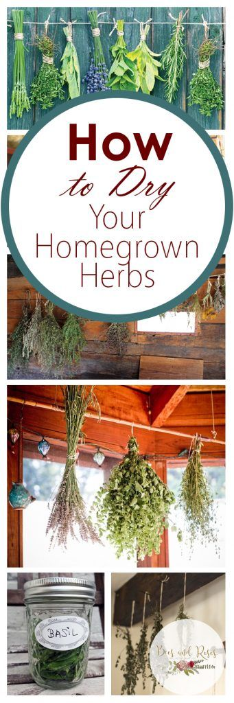 How to Dry Your Homegrown Herbs  Drying Homegrown Herbs, How to Dry Homegrown Herbs, Herbs, Growing Homegrown Herbs, Gardening, Gardening Hacks, Gardening TIps and Tricks, Popular Pin