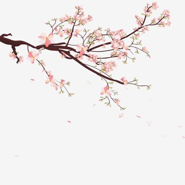 Watercolor Frame Background With Sakura Cherry Blossoms Tree Branches Sakura Blossom Hand Painted Png And Vector For Free Download Bac Sakura Branches Resim