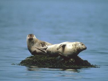 Pour voir des phoques, visitez le Parc national du Bic!