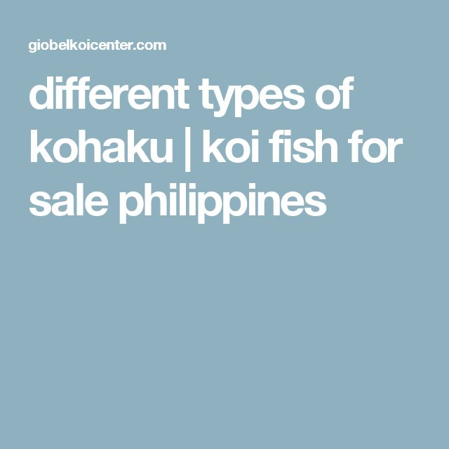 different types of kohaku | koi fish for sale philippines