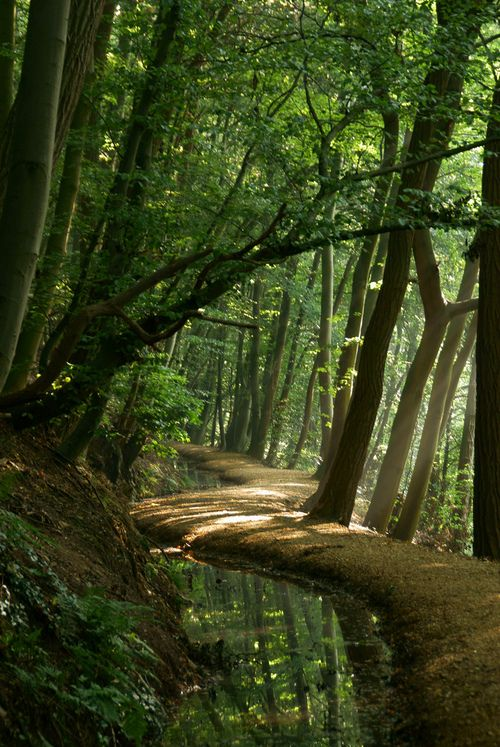✯ Forest Path - The Netherlands