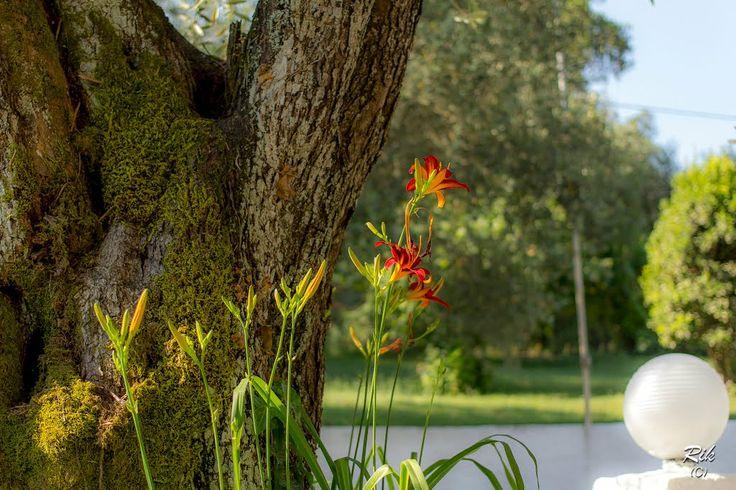 Saint Nicholas Hotel (Gouvia, Corfu) Gardens