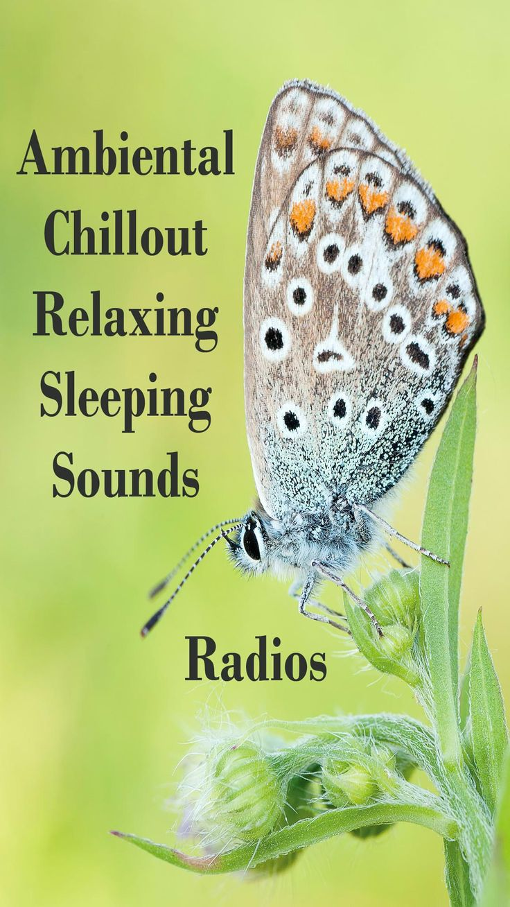 Ambient Chillout Lounge Relaxing and Sleeping Music Sounds https://play.google.com/store/apps/details?id=com.streamradio.ambientrelaxingchilloutsleepingmusic #ambient #chillout #sleepingmusic