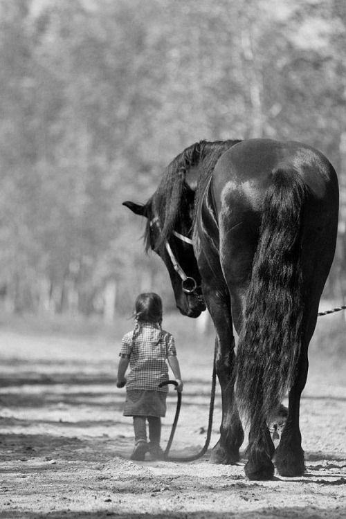 Little girl leading a big horse..