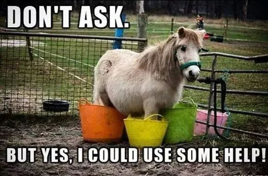 Horse humor. Don't ask. But yes, I could use some help!