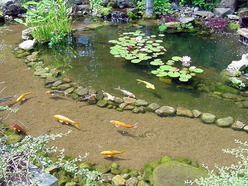The shallow end allows you to view the fish and the deep for Koi pond protection
