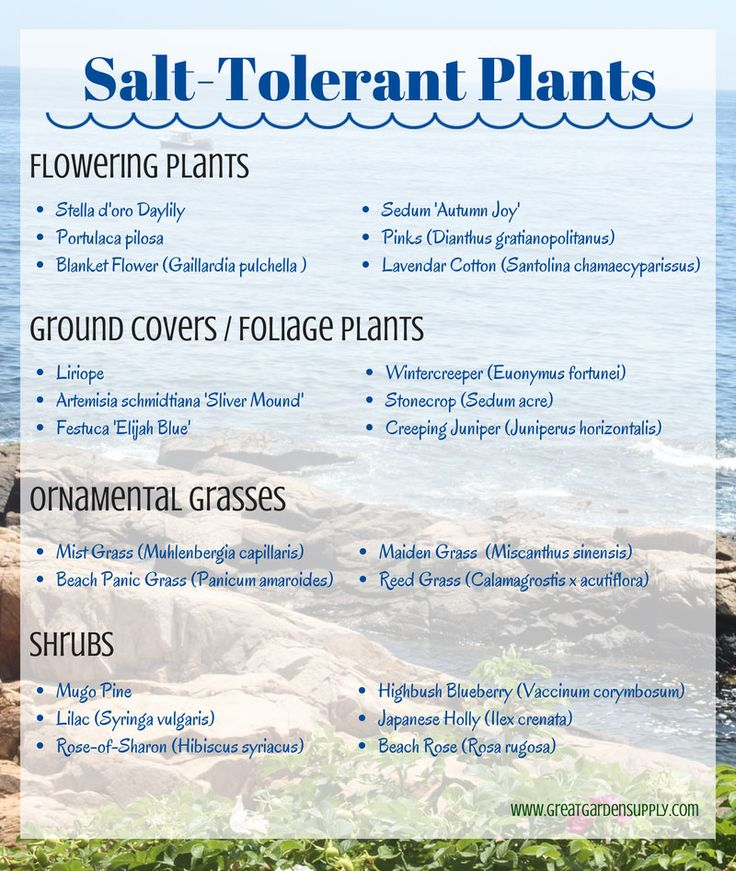 Salt-Tolerant Plants for Seaside Gardening #seaside #gardening #tips Good to know for mailbox garden!