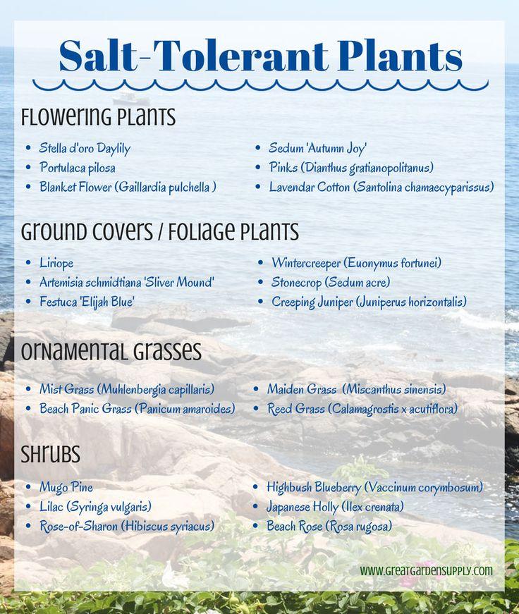 Salt-Tolerant Plants for Seaside Gardening #seaside #gardening #tips Good to know for mailbox garden!