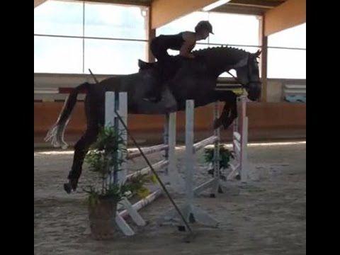 www.sporthorses-online.com 2010 Holsteiner Hunter / Jumper gelding for sale