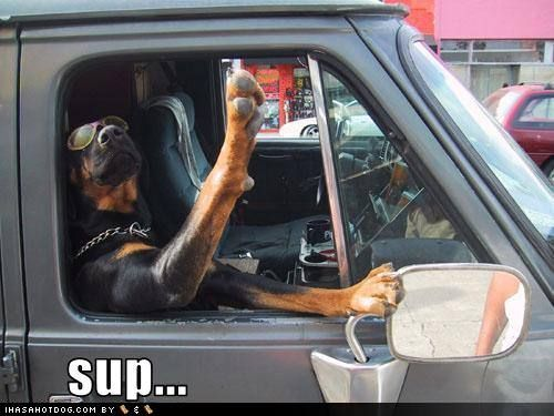 Rottweilers - Check Out The Lighter, Funnier Side Of This Fantastic Breed | Pet comics, humor, poetry - Yeepet