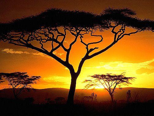 afrikai - Google keresés