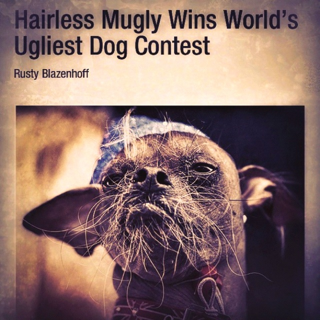 Ugliest Dog Contest: Dogs Contest, Ugliest Dogs